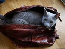 in my bag・・・・・・