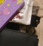 Algonquinsのバッグ